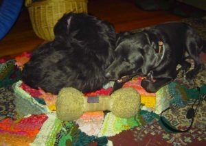 Molly and Nigel test a rug.